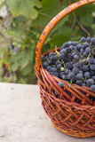 Baskets with nature grapes Royalty Free Stock Photos