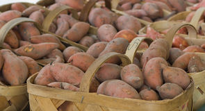 Baskets of Newly Harvested Sweet Potatoes Stock Photo
