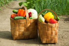 Baskets Of Vegetables Stock Photography