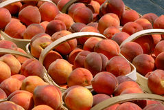 Baskets of Peaches royalty free stock images