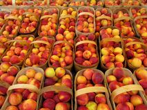 Baskets of peaches Stock Image