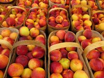 Baskets of peaches Royalty Free Stock Image