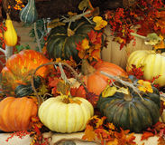A baskets  with pumpkins  and leaves Stock Photo