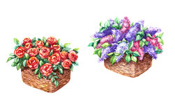Baskets with Red Rose and Lilac Flowers Royalty Free Stock Images