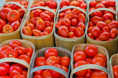 Baskets of Red Tomatoes (solanum lycopersicum) Royalty Free Stock Photography