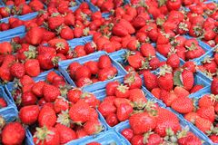 Baskets of Ripe Strawberries Royalty Free Stock Photo