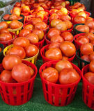 Baskets of Ripe Tomatoes Royalty Free Stock Photography