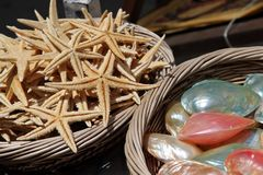 Baskets of Sea Shells and Starfish For Sale Stock Images