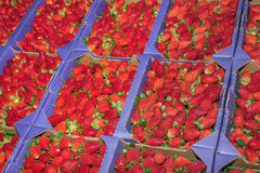 Baskets of Strawberries Stock Image