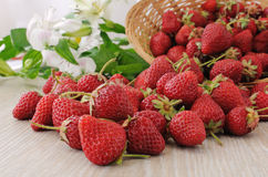 Baskets of strawberries sprinkled on the table close-up Royalty Free Stock Photos