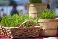Baskets Of Wheatgrass royalty free stock photos