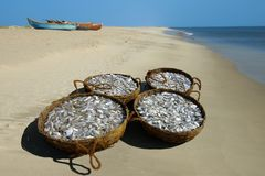 Baskets With A Fish On Seacoast. Stock Photography