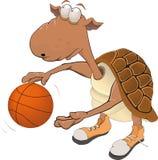 basketspelaresköldpadda Arkivfoto