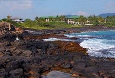 Basking in tropical sunshine Royalty Free Stock Image