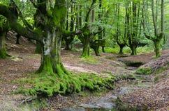 Baskisch Land royalty-vrije stock afbeelding