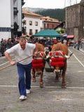 Baskische landelijke sporten - Idi probak (ossentests) Royalty-vrije Stock Afbeelding