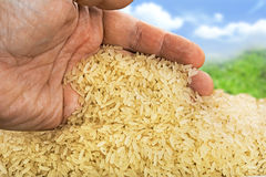 Basmati rice background Stock Image