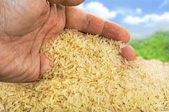 Basmati rice background Stock Image