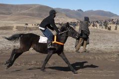 Basotho, der Pony läuft Lizenzfreie Stockbilder