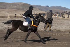Basotho racing pony. Horse Racing in Semonkong, Lesotho, July 17, 2010. A racing Basotho pony arrive at the winning post, represented by a man standing by a pile Royalty Free Stock Images