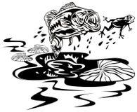basowa chwytająca żaba Obraz Stock