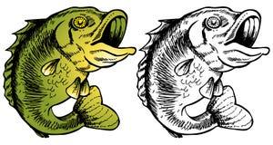 basowy duży usta Zdjęcia Stock