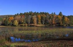 Basowy jezioro Zdjęcia Royalty Free