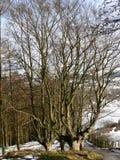 basque landsskogurkiola Royaltyfri Foto