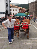 Basque rural sports - Idi probak (oxen tests) Royalty Free Stock Image