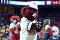 2015 basquetebol do NCAA - Templo-ECU Imagens de Stock Royalty Free