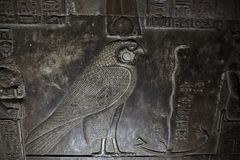 Basrelief av den egyptiska falkguden Horus Arkivbild