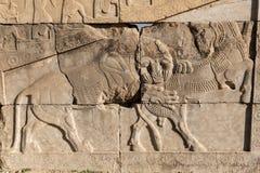 Basrelief av persepolis fördärvar, Shiraz Iran Arkivbilder