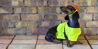 Bassê do construtor do cão em um capacete alaranjado da construção no fundo da parede de tijolo billboard foto de stock