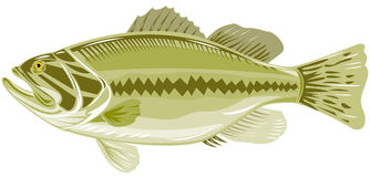 Bass. Vector art of a fish isolated on white Royalty Free Stock Photo