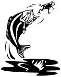 Bass catching a frog. Vector art on fish and fishing industry Stock Images