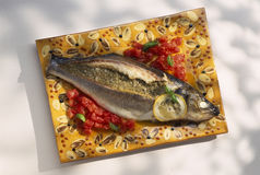 Bass with fennel Stock Photography