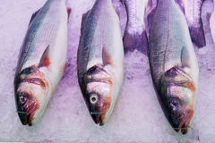Bass ( fish ). Fresh seabass at the fish market Royalty Free Stock Image