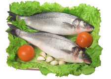 Bass (fish). With lettuce, tomatos and garlic stock photo