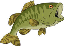 Bass fish cartoon Royalty Free Stock Photos