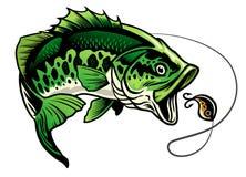 Bass fish catching the fishing lure