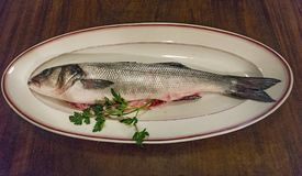 Bass fish in flat. Freshness bass fish in flat with parsley royalty free stock images