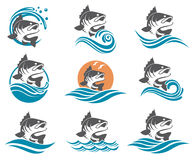 Bass fish illustrations set Royalty Free Stock Photography
