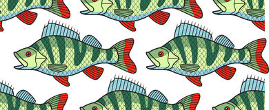 Bass fish pattern. Seamless pattern of the cartoon bass fish Royalty Free Stock Photo