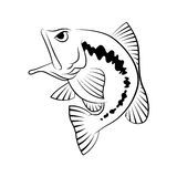 Bass fish symbol on white background,Vector. Royalty Free Stock Photo