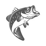 Bass fish vector illustration in monochrome vintage style. Design elements for logo, label, emblem. Royalty Free Stock Image
