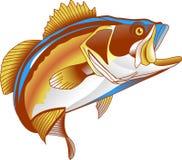 Bass Stock Image