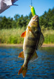 Bass. Fishing on the river Stock Photo
