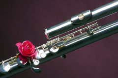 Bass Flute Rose Isolated on Purple Stock Photos