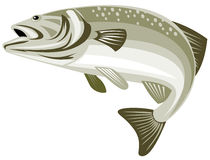 Bass jumping. Vector art of a bass jumping with white background Stock Images
