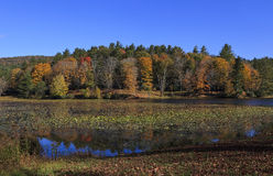 Bass Lake. Cone Lake, also called Bass Lake, at the Moses Cone Memorial Park near Blowing Rock in the fall royalty free stock photos